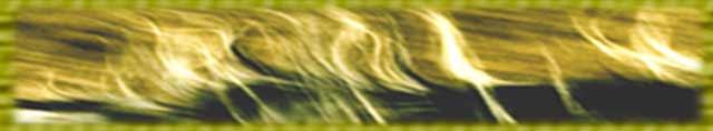 mensch pferd bielefeld